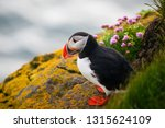 Atlantic Puffin Also Know As...