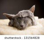 Stock photo kitten sleeping russian blue cat 131564828
