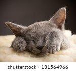 Stock photo kitten sleeping russian blue cat 131564966