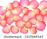 rose petals on a white... | Shutterstock . vector #1315669163