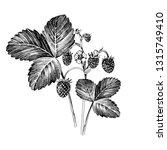 hand drawn wild strawberry...   Shutterstock .eps vector #1315749410