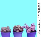 cactus lover minimal concept... | Shutterstock . vector #1315840226