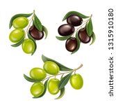 olive branches realistic set.... | Shutterstock .eps vector #1315910180