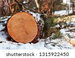 a cut of felled coniferous wood ... | Shutterstock . vector #1315922450