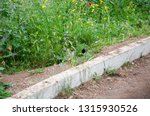 off the road. rural roadside in ...   Shutterstock . vector #1315930526