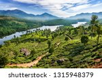 tea plantations near munnar ... | Shutterstock . vector #1315948379