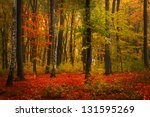 beautiful autumn foggy day into ... | Shutterstock . vector #131595269