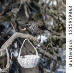 spotted nutcracker  nucifraga... | Shutterstock . vector #1315959863