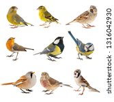 Set Of Small Song Birds...