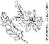 vector jungle botanical... | Shutterstock .eps vector #1316187380
