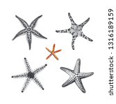 starfishes hand drawn  vector... | Shutterstock .eps vector #1316189159