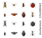 vector design of insect and fly ... | Shutterstock .eps vector #1316380463