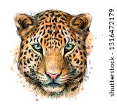 sketch color portrait of jaguar ... | Shutterstock .eps vector #1316472179