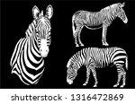 graphical set of zebras... | Shutterstock .eps vector #1316472869