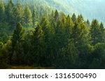 forest rain storm with drops... | Shutterstock . vector #1316500490