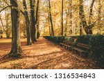 old benches in beautiful autumn ... | Shutterstock . vector #1316534843