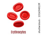 erythrocytes. blood cells in... | Shutterstock .eps vector #1316548139