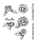 hand drawn camellia flowers.... | Shutterstock . vector #1316580716