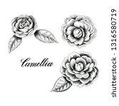 hand drawn camellia flowers.... | Shutterstock . vector #1316580719