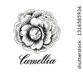 hand drawn camellia flowers.... | Shutterstock . vector #1316585936