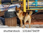 a large spotted dog stands at a ...   Shutterstock . vector #1316673659