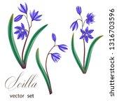 scilla. spring flowres. vector... | Shutterstock .eps vector #1316703596