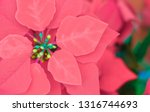 red flowers that are blooming | Shutterstock . vector #1316744693