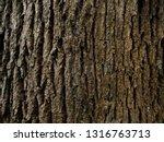Rustic Tree Bark Texture...