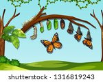 a butter fly life cycle... | Shutterstock .eps vector #1316819243
