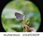 Beautiful Butterflies In Macro...