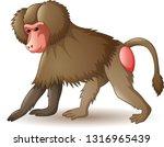 Illustration Of Baboon Isolate...