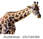 a giraffe  giraffa... | Shutterstock . vector #1317164183