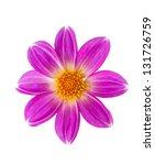 beautiful flower on a white... | Shutterstock . vector #131726759