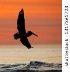 brown pelican  pelecanus... | Shutterstock . vector #1317365723