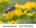 a solitary bee feeding nectar... | Shutterstock . vector #1317545303