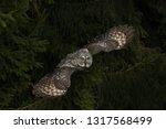 Great Grey Owl Flying In Dark...