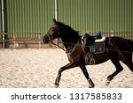 black horse photographed from... | Shutterstock . vector #1317585833