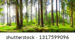 beautiful forest in spring with ... | Shutterstock . vector #1317599096