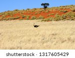 ostrich walking in the yellow... | Shutterstock . vector #1317605429