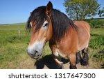 cart horse brown mammal meadow... | Shutterstock . vector #1317647300