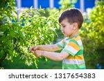 closeup portrait of little... | Shutterstock . vector #1317654383