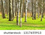 forest in early spring. | Shutterstock . vector #1317655913