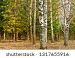 forest in early spring. | Shutterstock . vector #1317655916