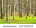 forest in early spring. | Shutterstock . vector #1317655919