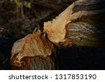 close up of a tree trunk felled ... | Shutterstock . vector #1317853190