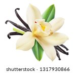 Small photo of Dried vanilla sticks and orchid vanilla flower. File contains clipping path.