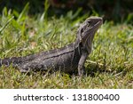 side profile of an eastern... | Shutterstock . vector #131800400