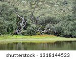 shallow lake at the high... | Shutterstock . vector #1318144523
