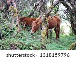 horse in a polylepis forest at... | Shutterstock . vector #1318159796