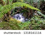 stream in the forest with a... | Shutterstock . vector #1318161116